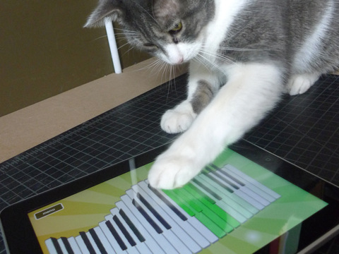 Cat playing Magic Piano HD By Smule #funny